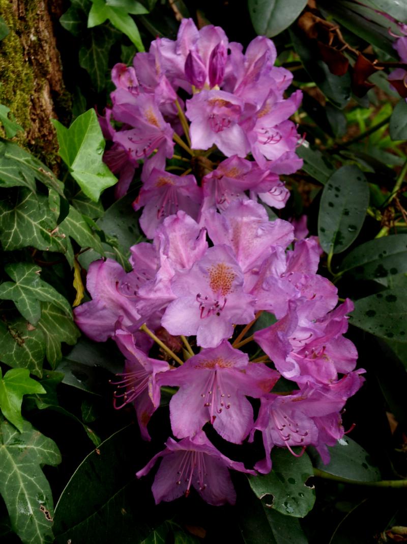 800_W_Dwa_kwiaty.JPG
